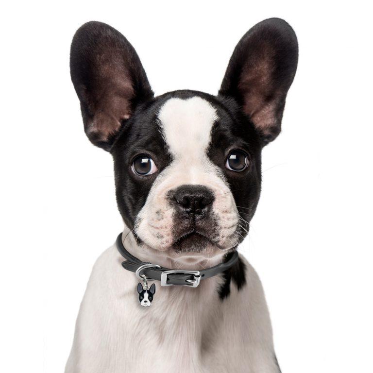 Boston Terrier hundetegn
