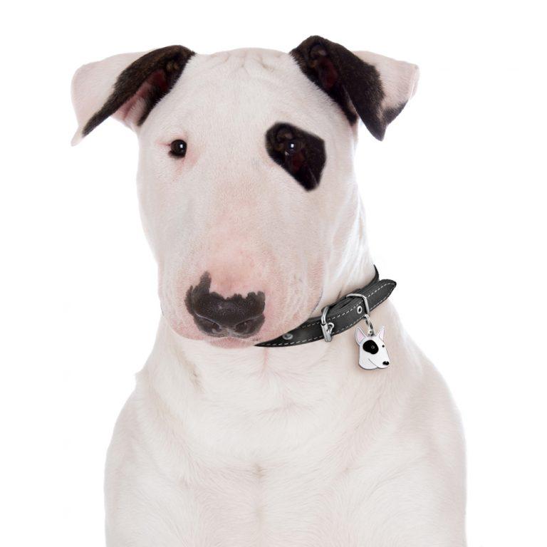 bull terrier gravhund