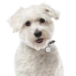Coton de tulear hundetegn