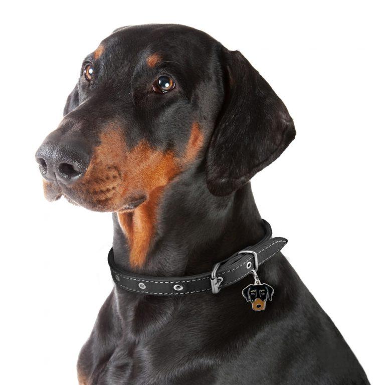Dobermann hundetegn