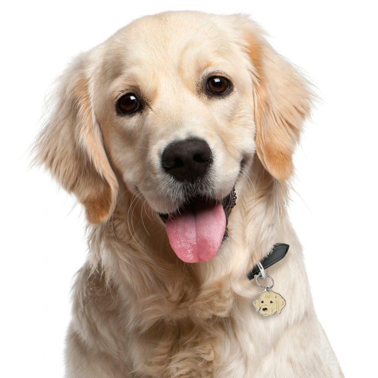 Golden retriever hundetegn