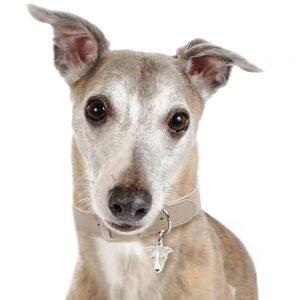 Greyhound hundetegn