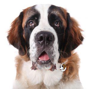 Sankt Bernhard hundetegn