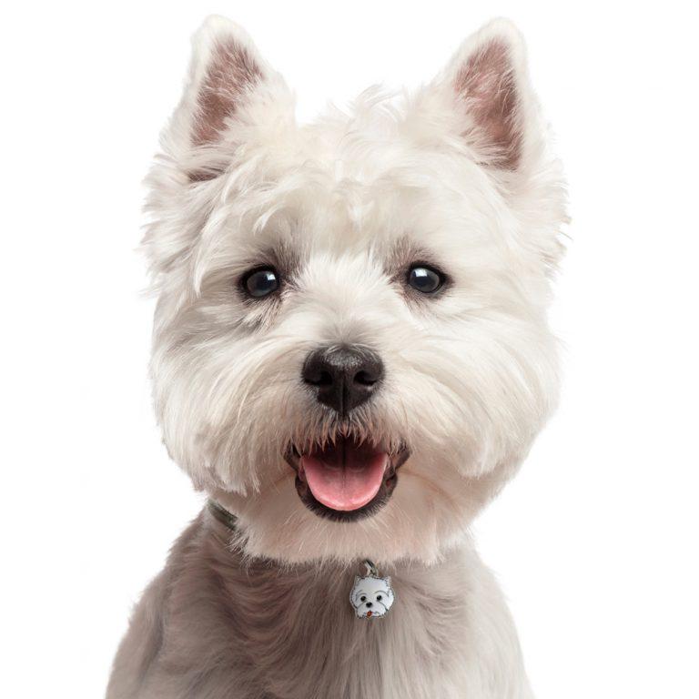 West highland terrier hundetegn